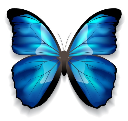 Image of a butterfly with blue wings