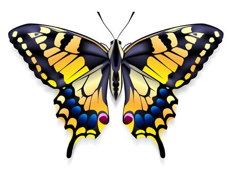 Image of a butterfly with yellow wings