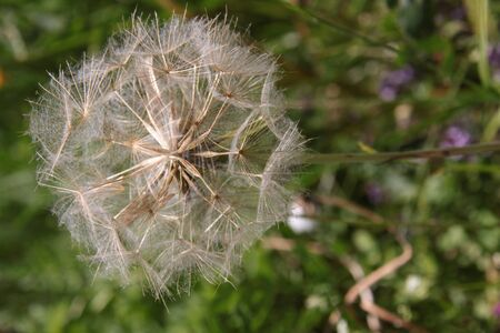 씨앗에 꽃