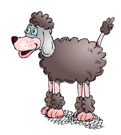 cute dog: Sketchy cute dog poodle