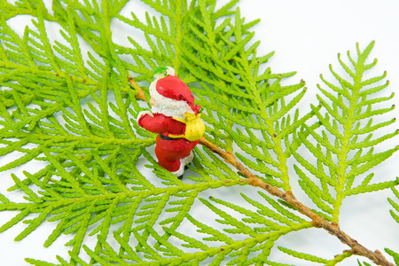 Figurine of Santa Claus stands on the thuja Leaves on white background