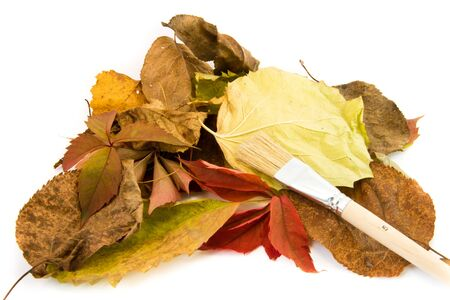 torn edge: The Photo Autumn leaves lie isolated on white background.