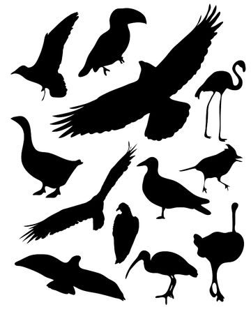 illustrated bird silhouettes Vector