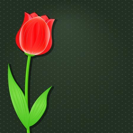 tulipe rouge: Carte d'invitation fonc� avec la fleur simple - Tulipe rouge. Vecteur de fond floral