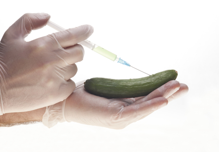 Genetic experiment with cucumber Stock Photo - 23256979