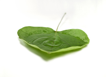 fallin: Drop fallin into water that is found in the leaf Stock Photo