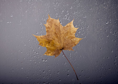 View of falling autumn leaf through the window with rain drops. photo