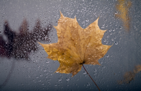 View of falling autumn leaves through the window with rain drops. photo