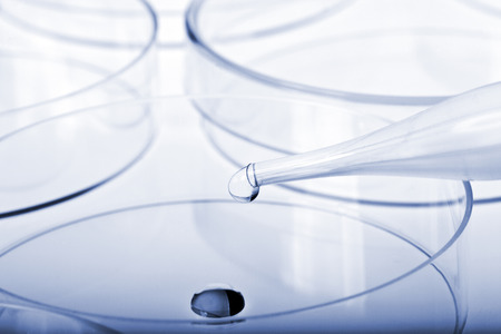 liquid material: Petri dishes and pipette with liquid material. Laboratory concept. Stock Photo