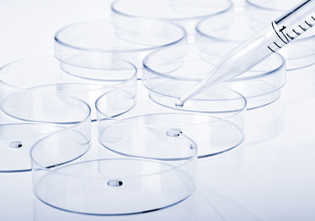 Petri dishes and pipette with liquid material. Laboratory concept. photo