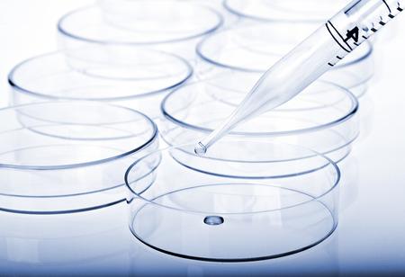 Petrischaaltjes en pipet met vloeibaar materiaal. Laboratory concept. Stockfoto
