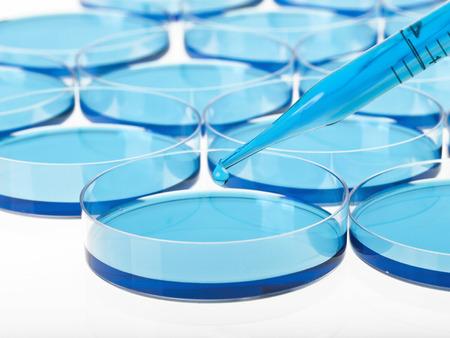 liquid material: Petri dishes,pipette and liquid material. Laboratory concept. Stock Photo