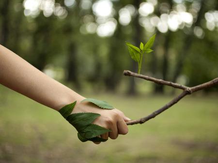 Concepto de medio ambiente. Apretón de manos entre la mano del hombre y el árbol. Foto de archivo