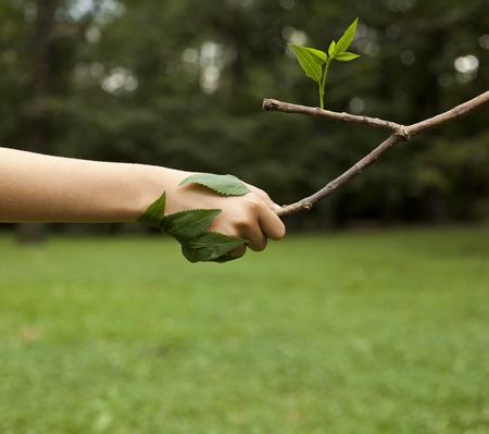 medio ambiente: Concepto de medio ambiente. Apret�n de manos entre la mano del hombre y el �rbol. Foto de archivo
