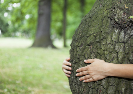Environment concept. Human hands hugging a tree that looks like the belly of a pregnant woman. Banque d'images