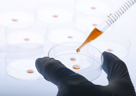 Petri dishes and pipette with liquid material. Laboratory concept. Stock Photo