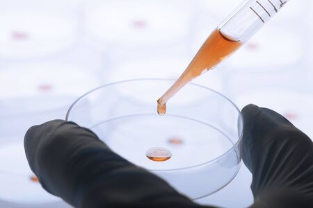 Petri dishes and pipette with liquid material. Laboratory concept. 写真素材