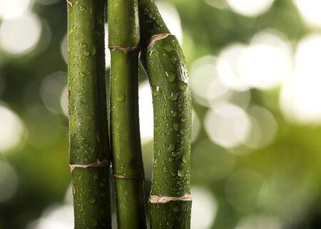 Hojas de bambú verde sobre un fondo de hojas tropicales