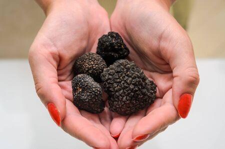 Mushrooms black truffles on human hands Reklamní fotografie