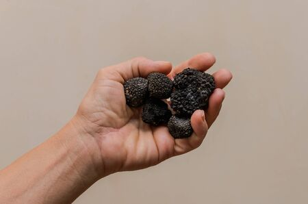 Mushrooms black truffles on human hands Imagens