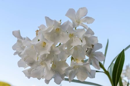 White blooming flower on a light background Imagens