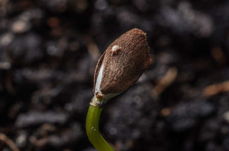 Tick on a young plant sprout Archivio Fotografico