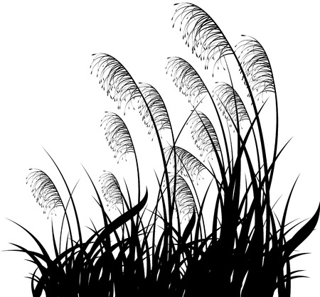 Black silhouette of a grass on a white background
