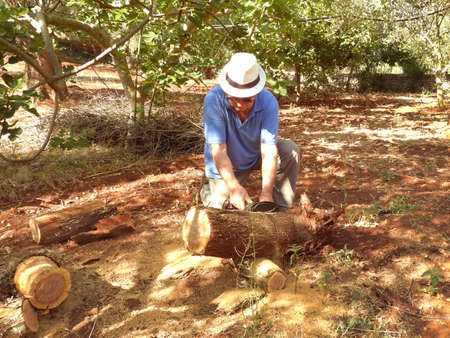 old man chopping wood with a chainsaw in the countryside with hat and striped shirt