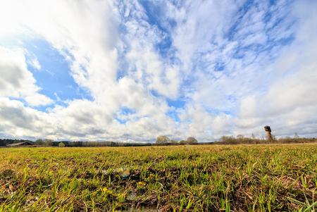 若草は春の雲の背景に。Id 写真素材