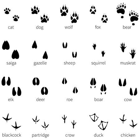 muskrat: Vector set of 20 animal footprints icon