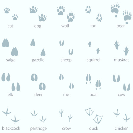 Vector Set of Animals Footprint  in the Snow Vectores