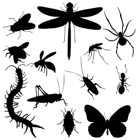 Vector Big Set of Black Insects Silhouettes
