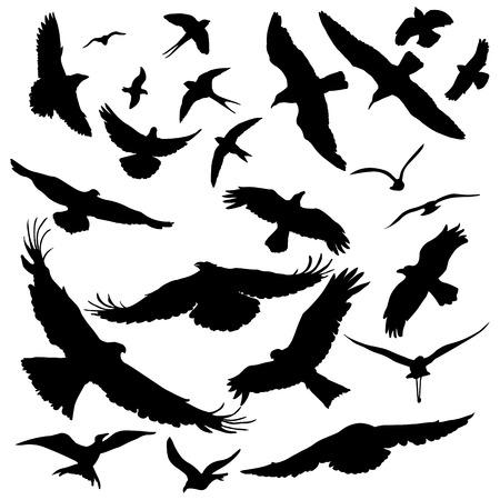 pigeon owl: Vector big set of black birds silhouettes