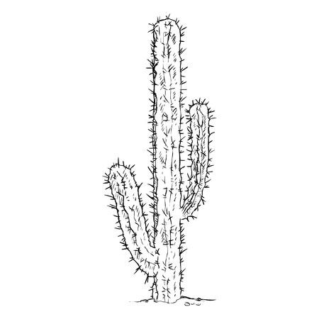 wilds: Vector Single Sketch Cacti