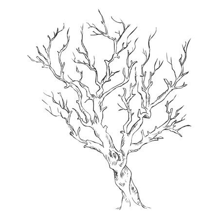 Vektor Einzelne Skizze Kahler Baum
