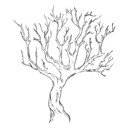 벡터 단일 스케치 벌거 벗은 나무