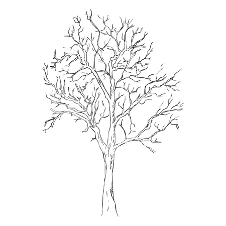 bare tree: Vector Single Sketch Bare Tree