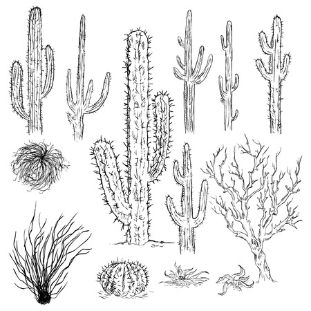plantas del desierto: Vector Set of Sketch Cactuses and Desert Plants