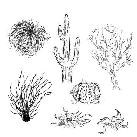 plantas del desierto: Vector conjunto de dibujo Cactus y Plantas del desierto Vectores