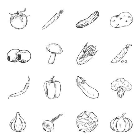 brocolli: Vector Set of Sketch Vegetables Icons. Tomato, Carrot, Cucumber, Potato, Olives, Mushroom, Corn, Peas, Chili Peper, Paprika, Eggplant, Brocolli, Cauliflower, Garlic, Onion, Cabbage, Pumpkin. Illustration