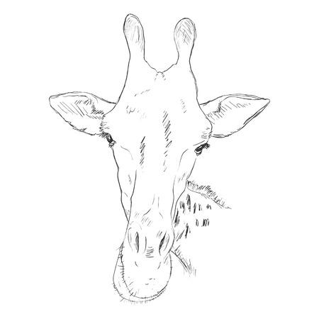 Vector Sketch Giraffe Muzzle Illustration
