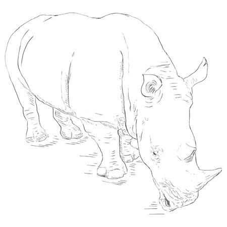 sketch: Vector Single Sketch Rhinoceros