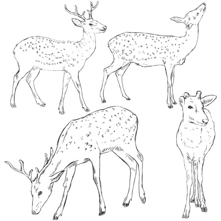dappled: Vector Set of Sketch Dappled Deers Illustration