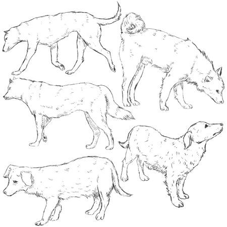 cur: Vector Set of Sketch Dogs