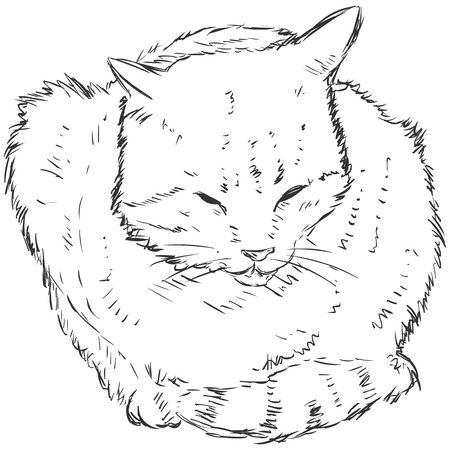 sketch: Vector Sketch Cat Illustration