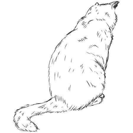 Vector Sketch Cat Illustration