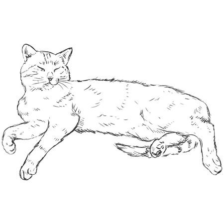 Vector Sketch Lying Cat Illustration