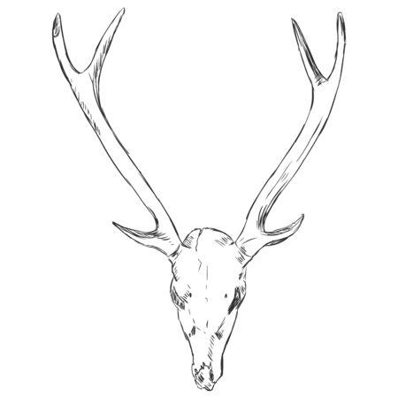 Vector Sketch Deer Skull Illustration