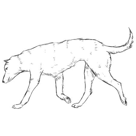 cur: Vector Sketch Dog Illustration