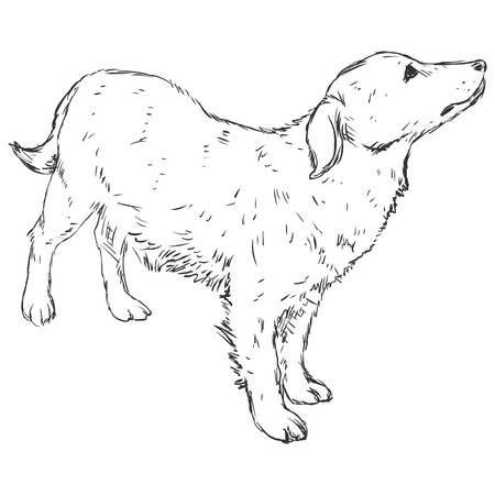 Vector Sketch Dog Illustration